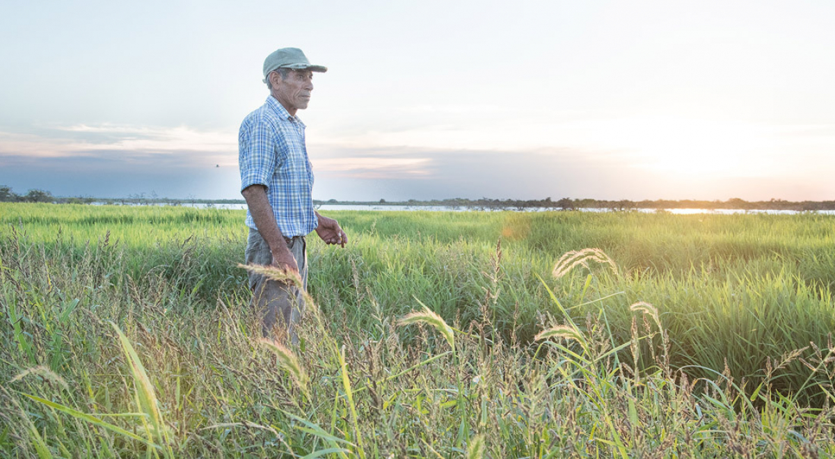 Biologisch rijstverslag