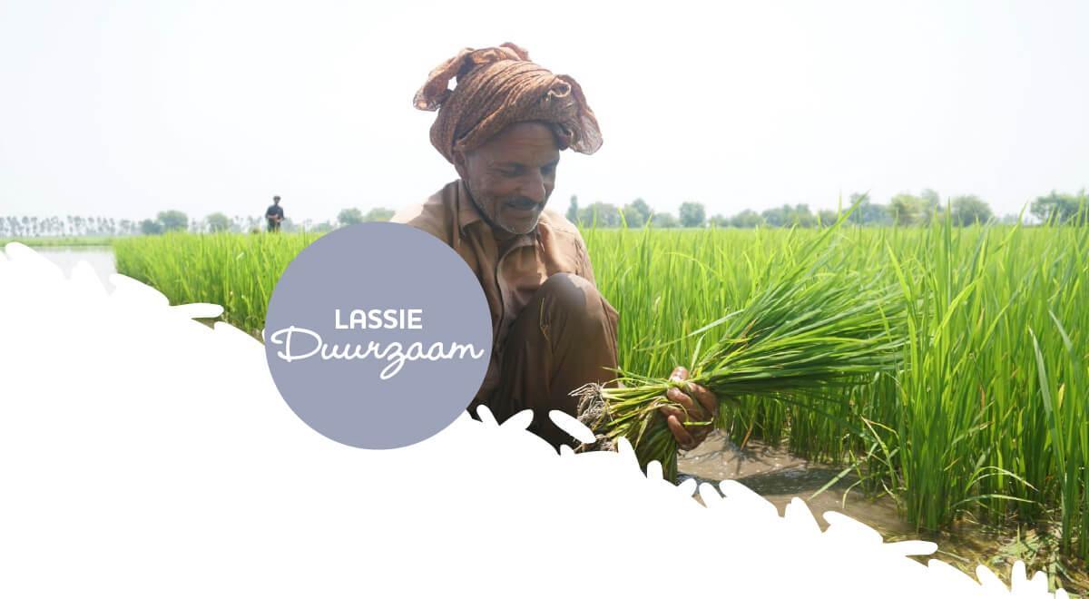 Op weg naar duurzame rijst